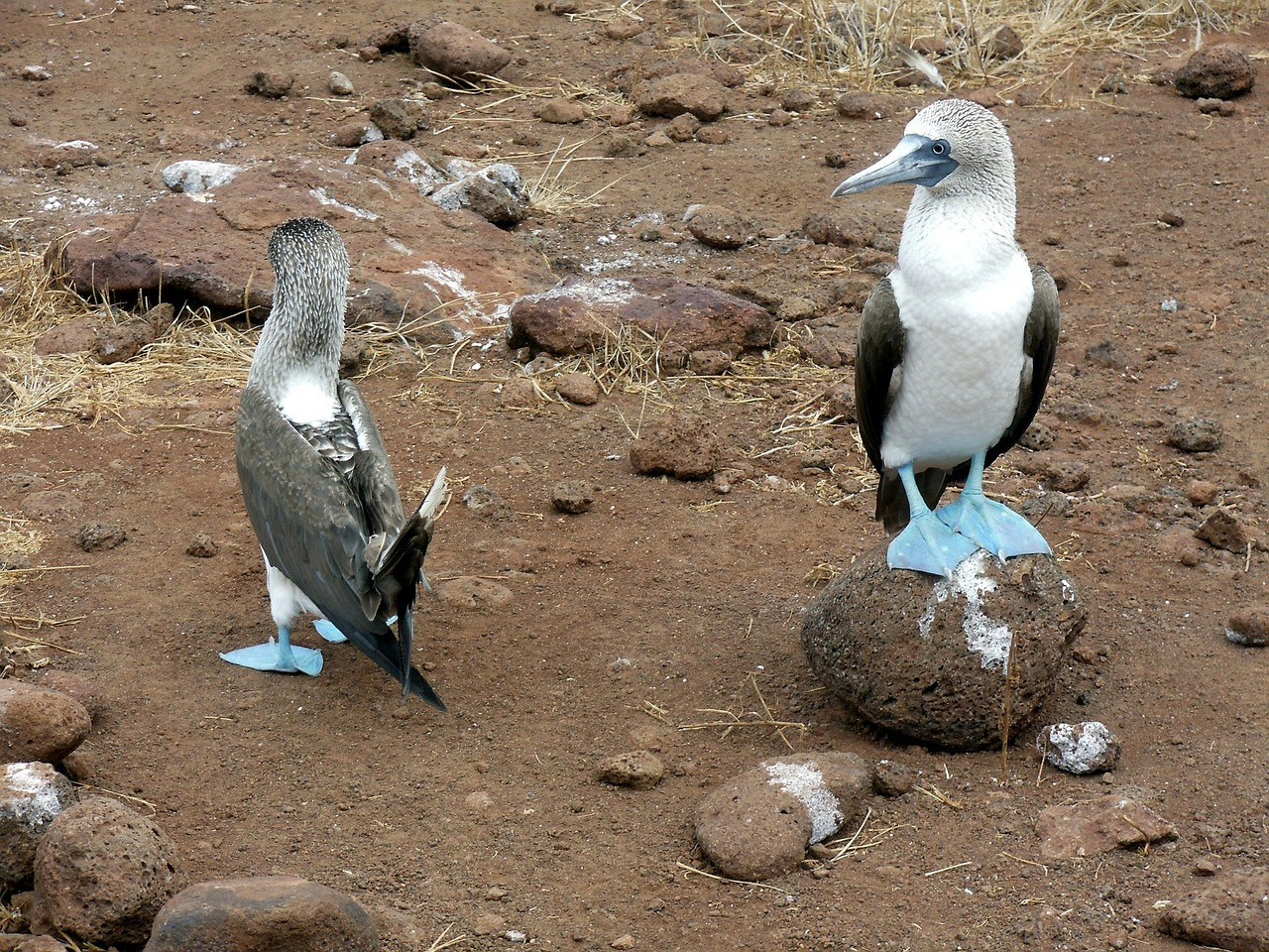What Animals Live In The Galapagos Islands