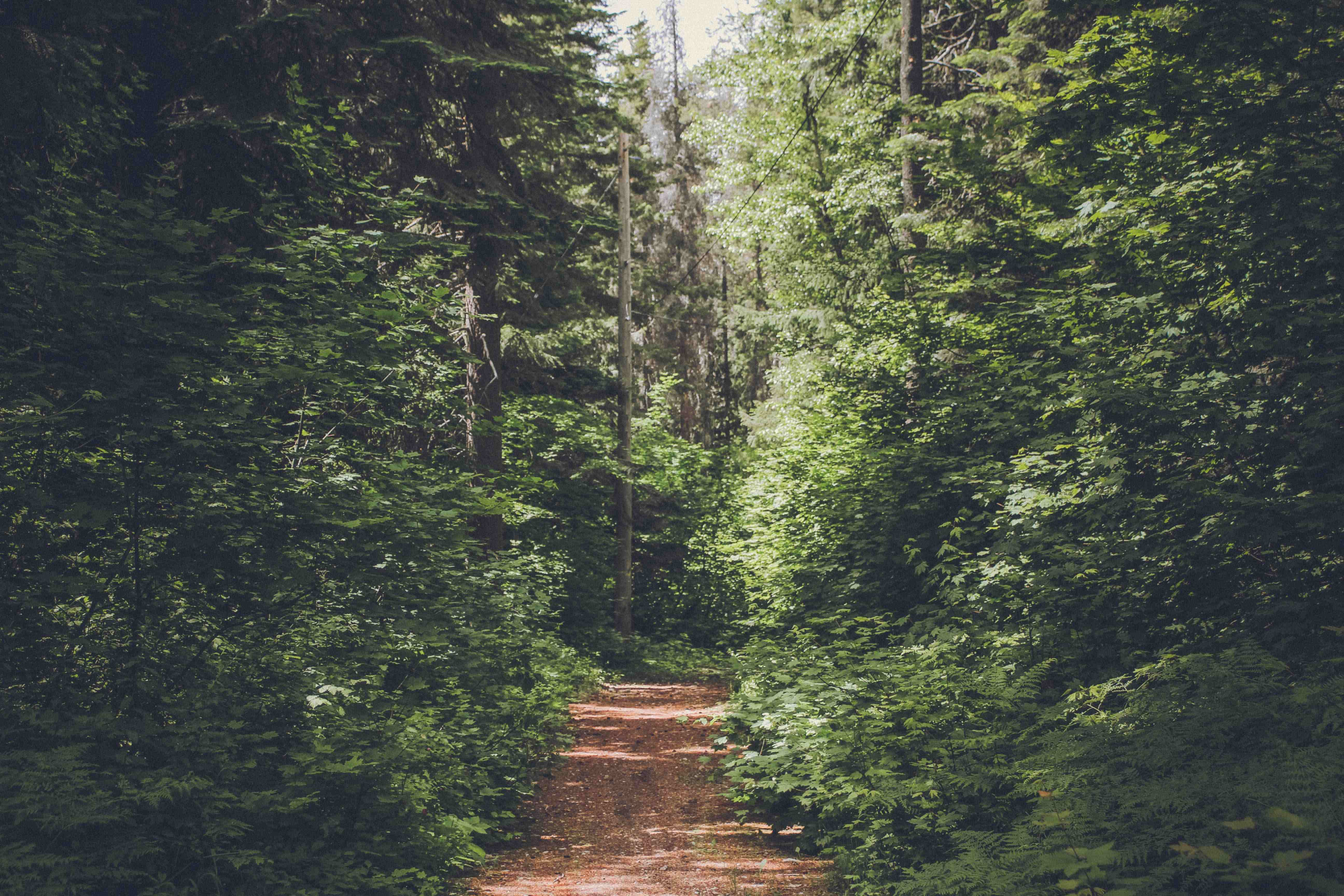Mental health benefits of being outdoors